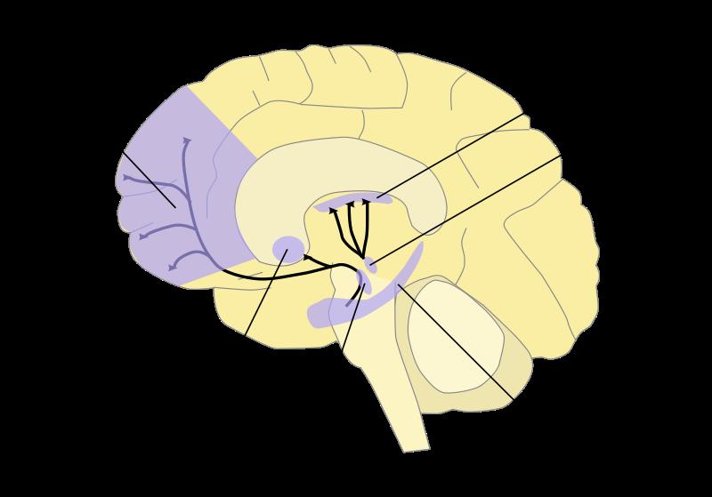 Belohnungssystem Gehirn