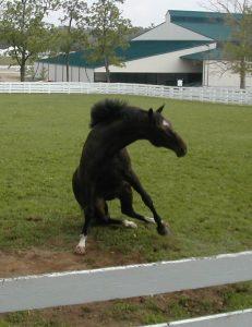 Pferd fällt verletzt