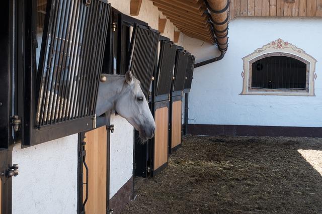 Pferd streckt Kopf aus Pferdebox