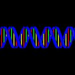 Neue Studie: Pathologisches Spielen womöglich genetisch begünstigt