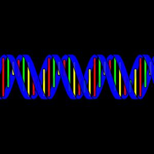 Ein DNA-Strang
