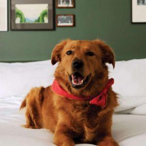Hund auf dem Bett