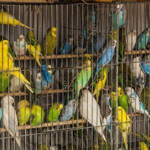 Käfige, Papageien, Sittiche