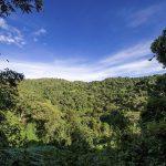 Glücksspielanbieter Paddy Power spendet 6.000 Bäume für jeden Arsenal-Misserfolg