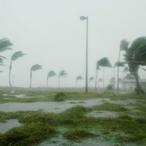 Hurrikan, Sturm, Palmen