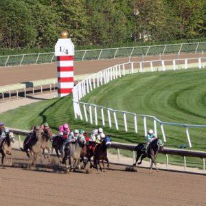 Pferderennbahn Rennpferde