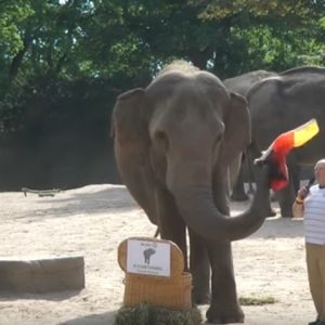 Elefanten, Menschen